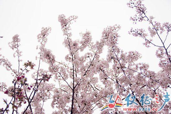 """摄影大赛,并通过@邗江发布 政务微博平台邀请网友参与""""微动邗城•"""